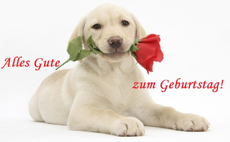 Alles Gute zum Geburtstag! Hund, Rose