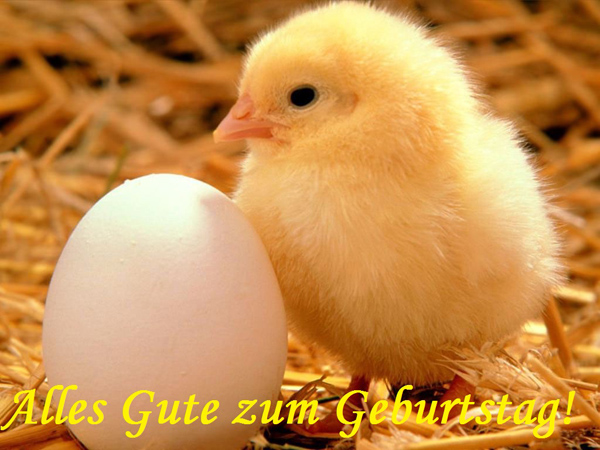 Alles Gute zum Geburtstag! Huhn, Ei